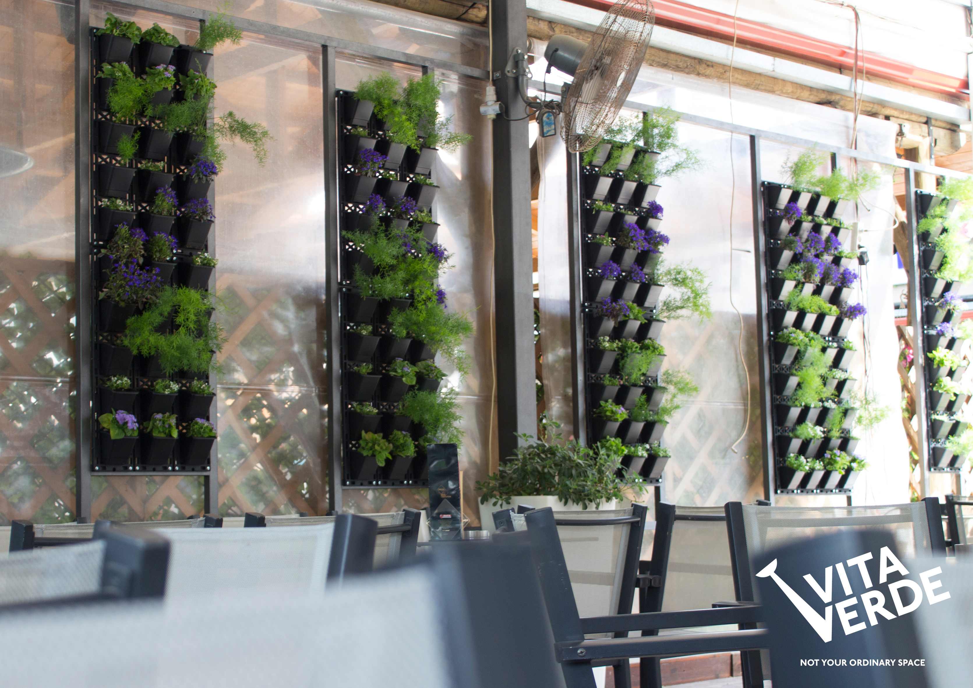 il mondo cafe stavros, green wall