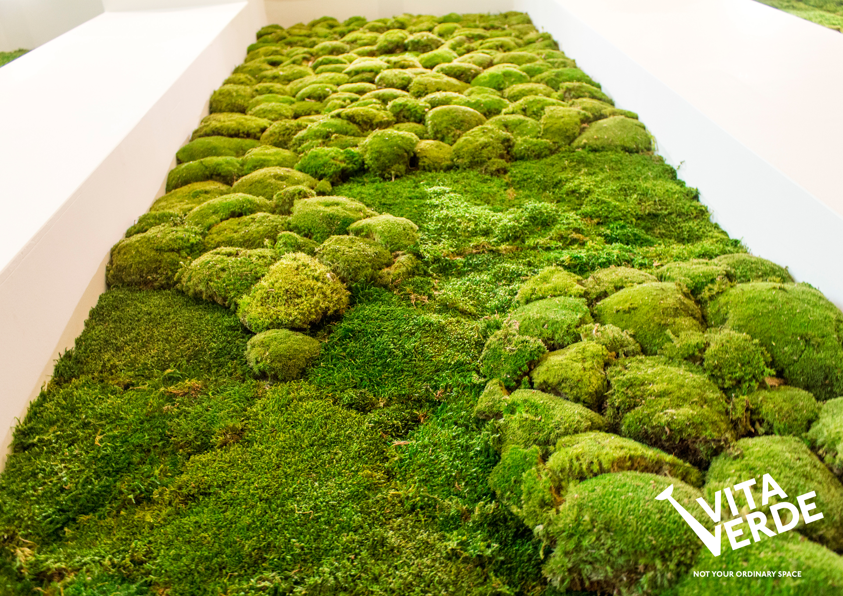 Moss on a wall