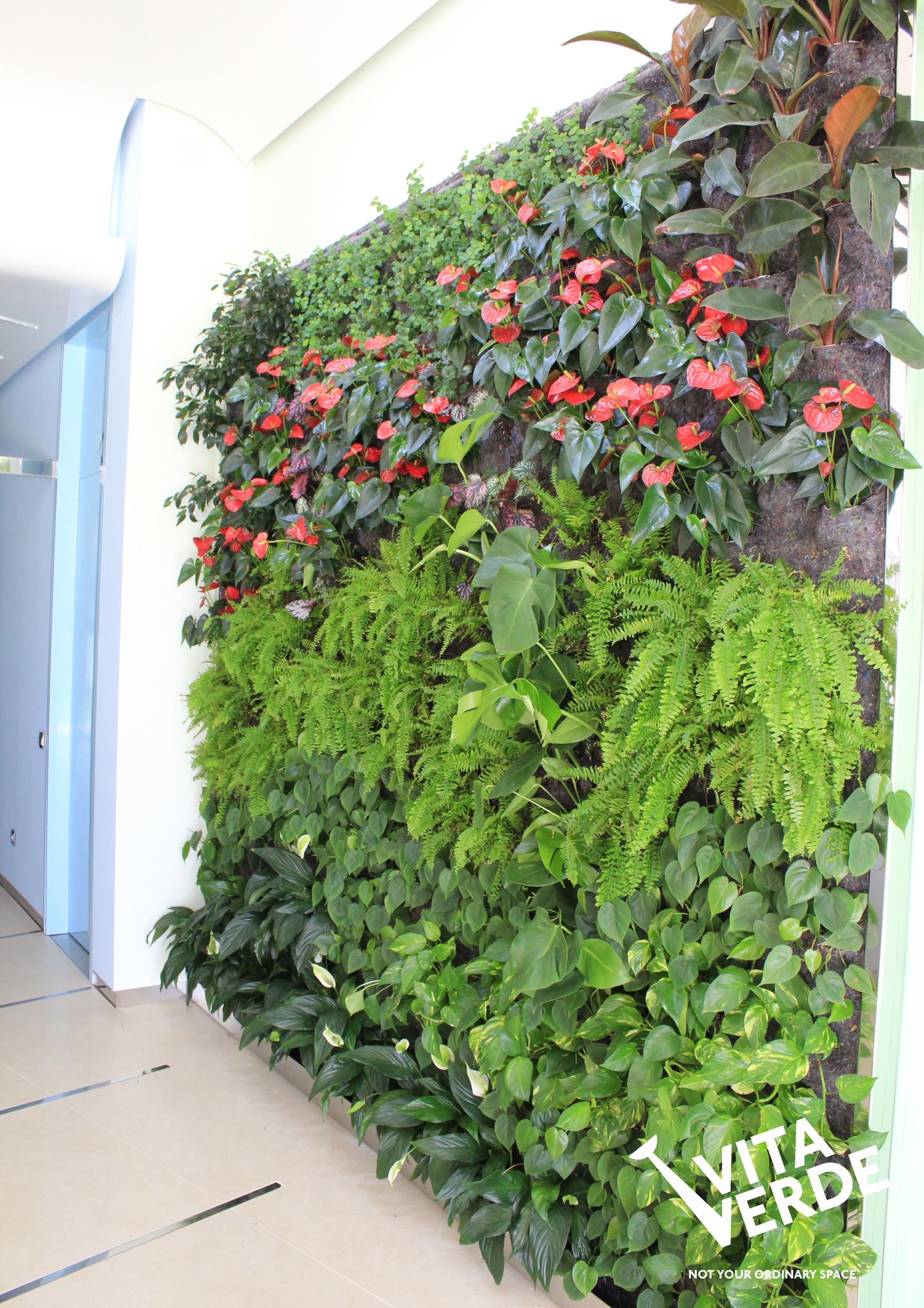 Strumica vertical garden
