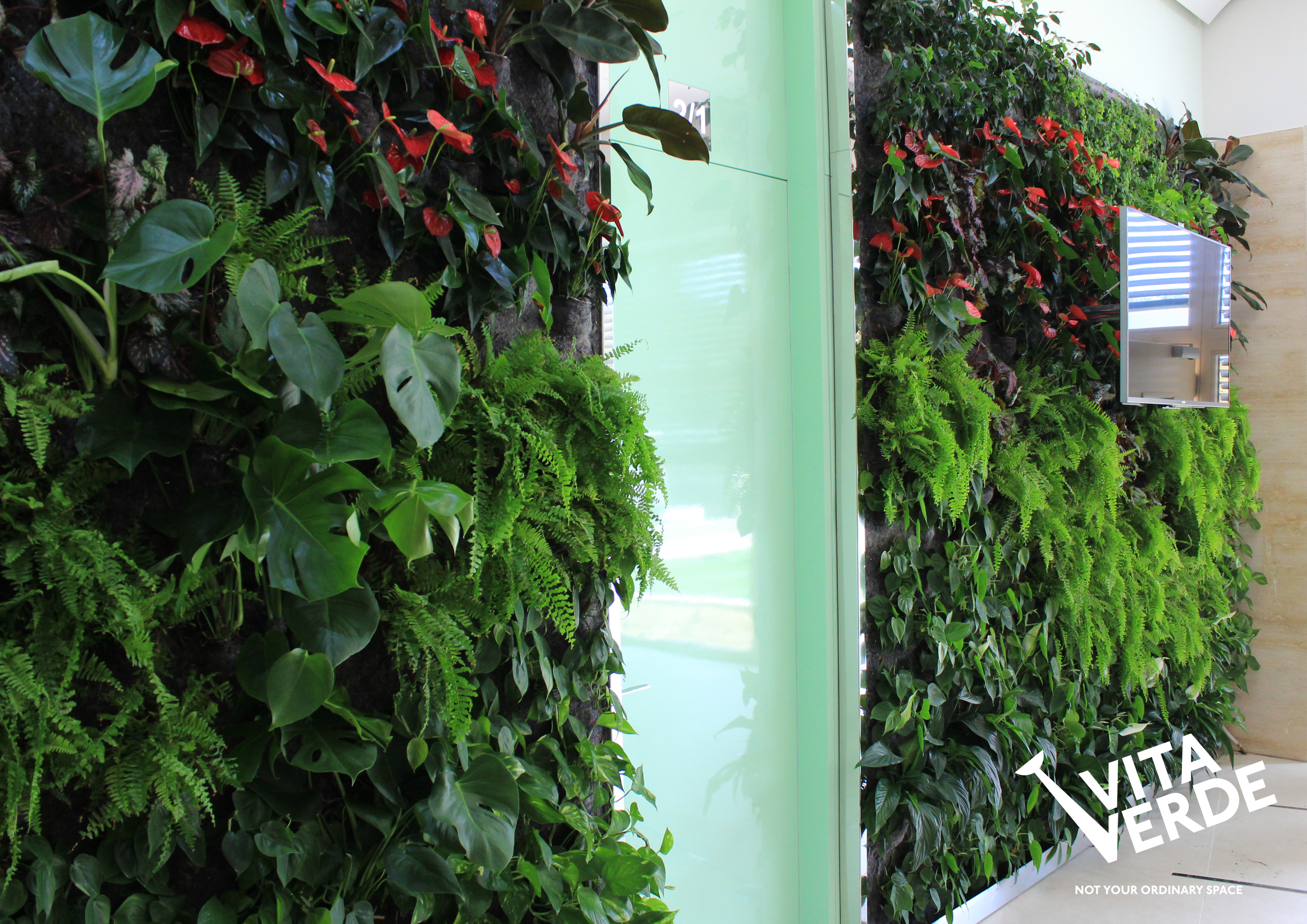 Vertical garden at a dental office