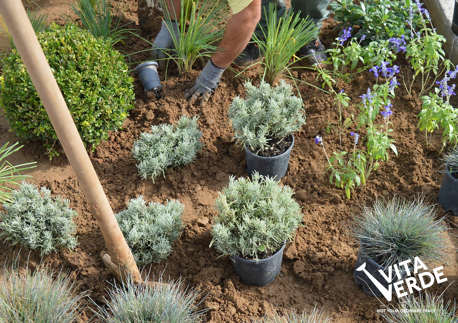 Planting phase of a new garden