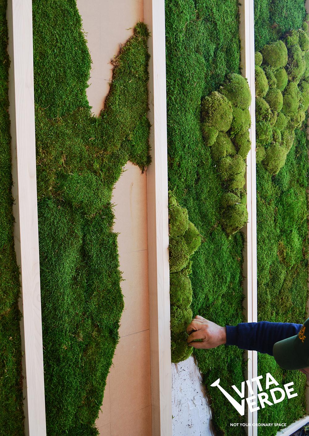 Moss wall instalation
